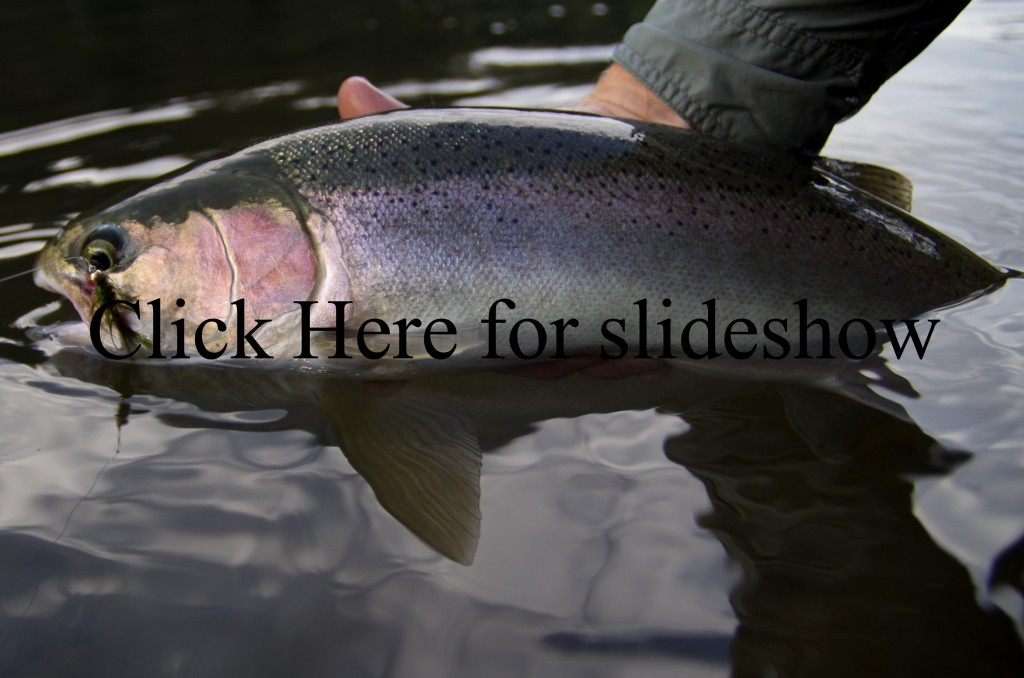 Fall Grande Ronde Steelhead